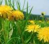 Tratamente naturiste pentru infectii urinare