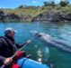 VIDEO O balenă cenuşie, observată în largul coastei Barcelonei